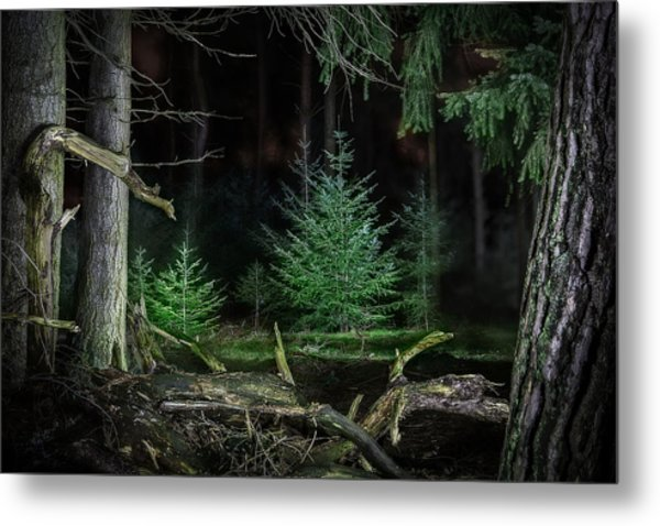 Pine Trees New Life Metal Print