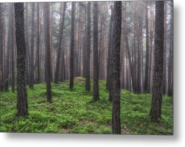 Pine Wood Metal Print
