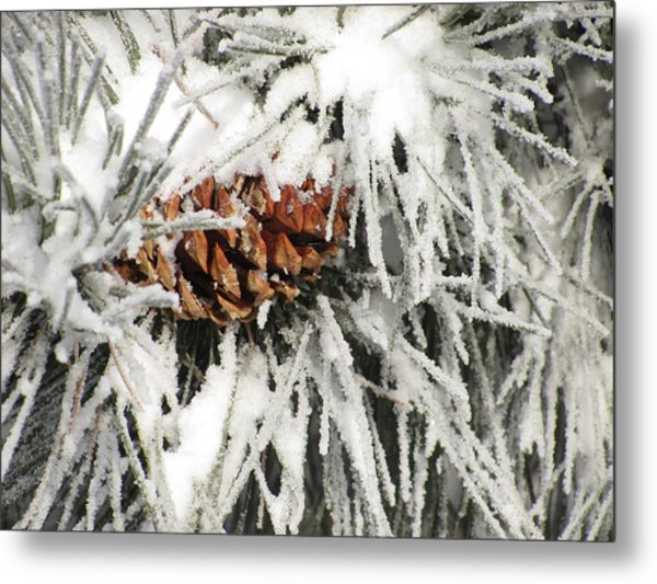Pinecone In Snow Metal Print by Steven Parker