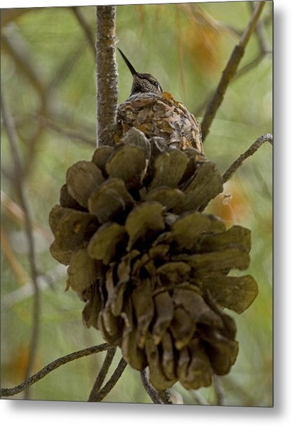 Pinecone Nest Metal Print