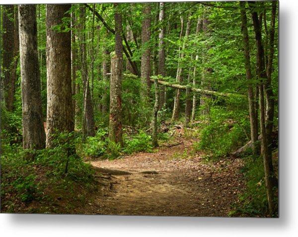 Pinewood Path Metal Print