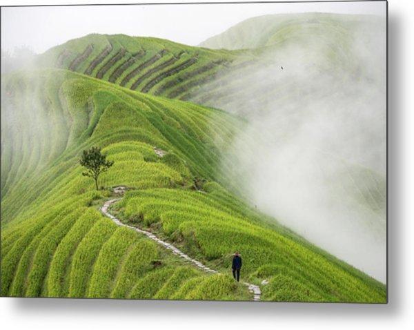 Ping'an Rice Terraces Metal Print by Miha Pavlin
