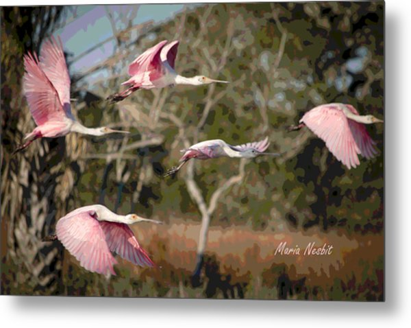 Pink And Feathers Metal Print