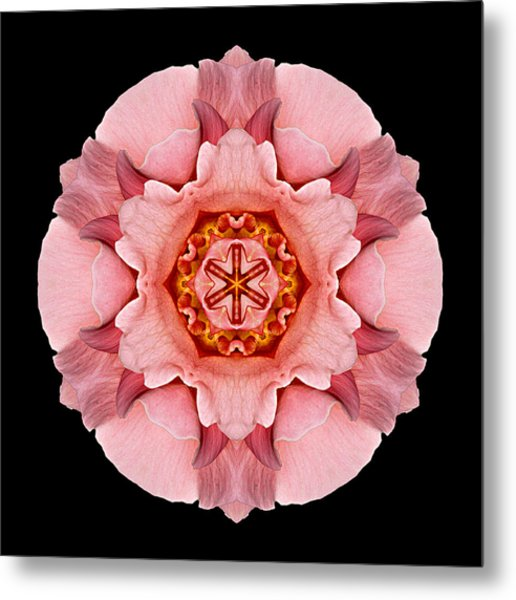 Pink And Orange Rose Iv Flower Mandala Metal Print
