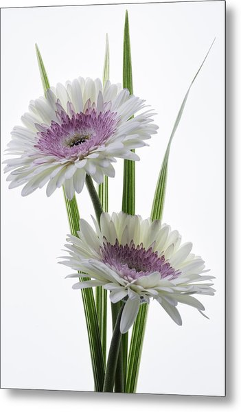 Pink And White Gerbera Metal Print