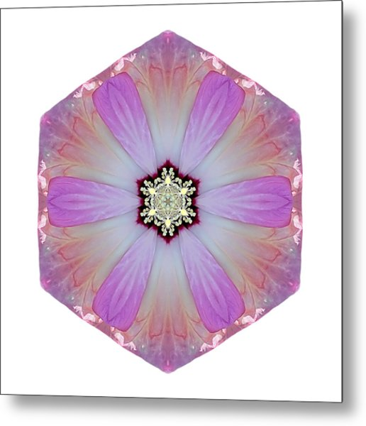 Pink And White Hibiscus Moscheutos I Flower Mandala White Metal Print