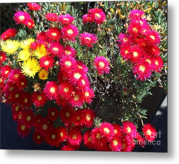 Pink And Yellow Wildflowers Metal Print