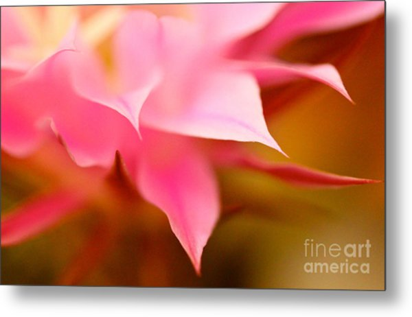 Pink Cactus Flower Abstract Metal Print