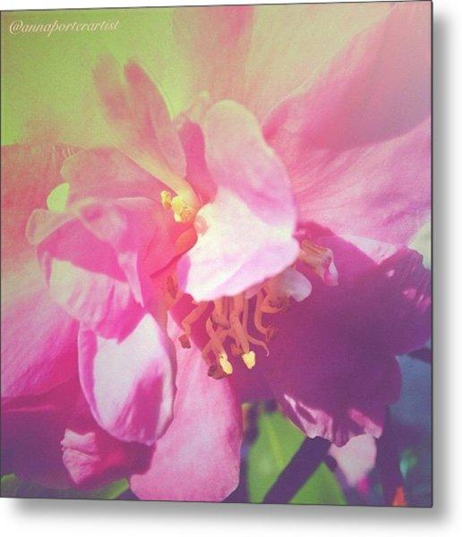 Pink Camellia Vintique Edit Metal Print