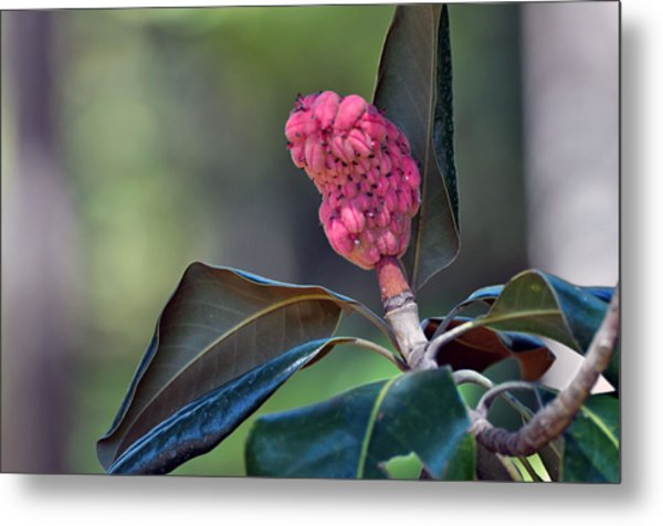Pink Candle Metal Print by Judith Russell-Tooth