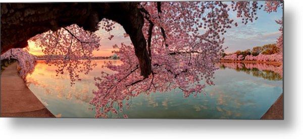 Pink Cherry Blossom Sunrise Metal Print