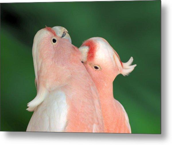 Pink Cockatoo Couple Metal Print