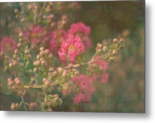 Pink Crepe Myrtle Metal Print