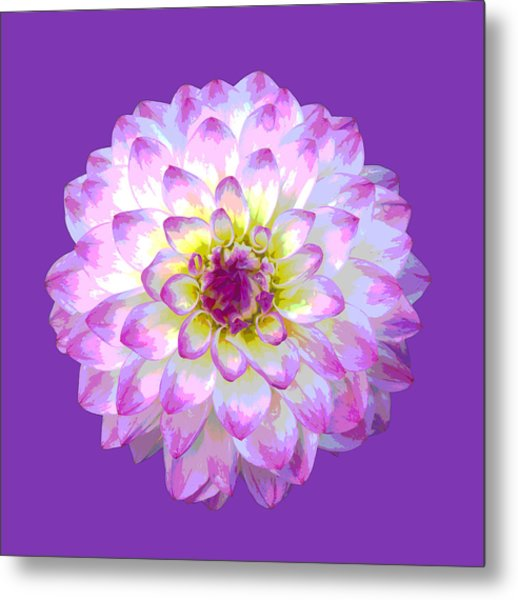 Pink Dahlia Posterized On Purple. Metal Print by Rosemary Calvert