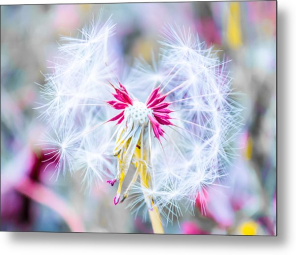 Magic In Pink Metal Print