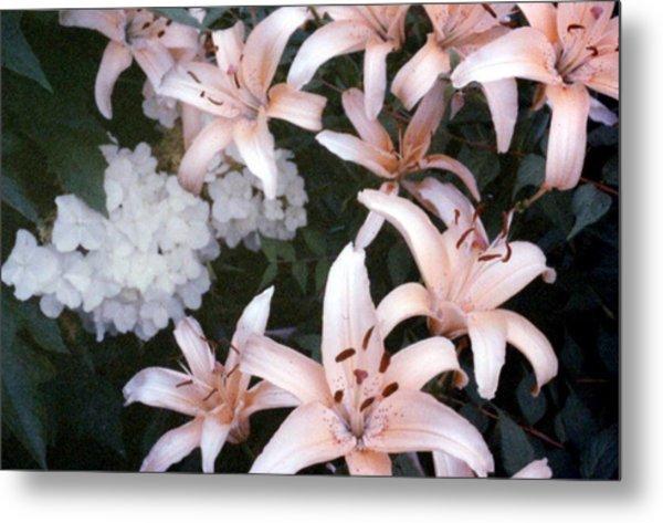 Pink Daylilies Metal Print