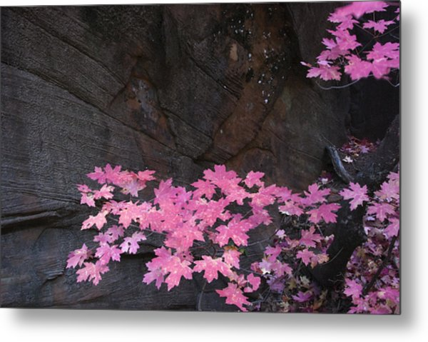Pink Fall Colors In Sedona Arizona Metal Print