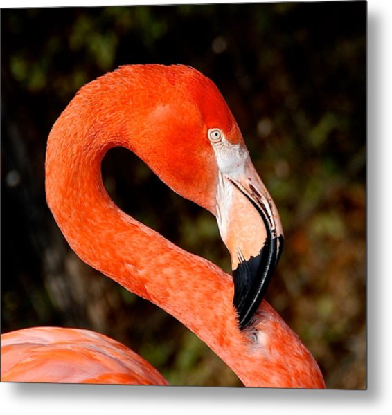 Not So Pink Flamingo Metal Print