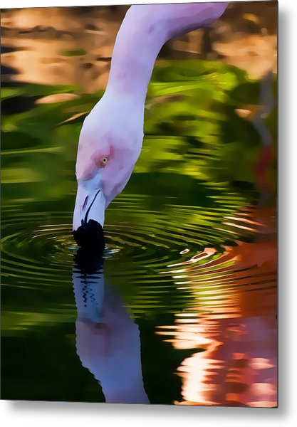 Pink Flamingo Ripples And Reflection Metal Print