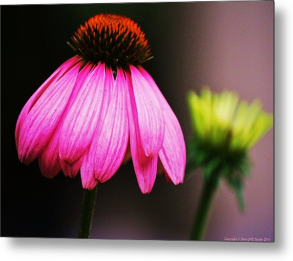 Pink Is A Colour... Metal Print