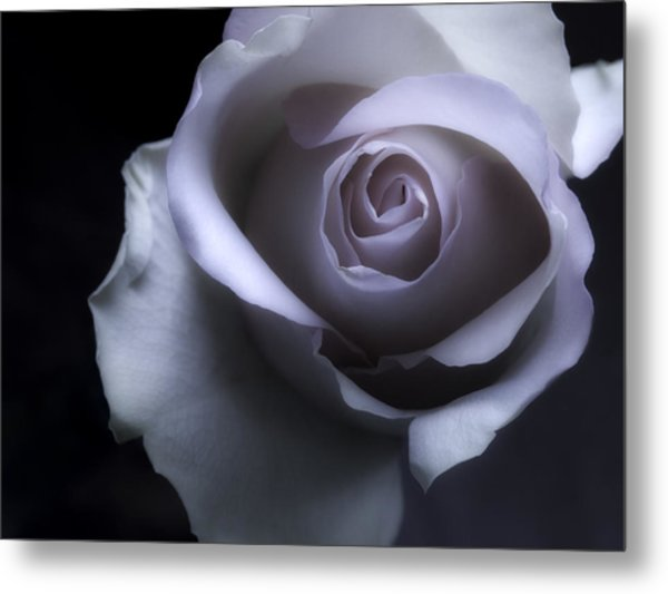 Black And White Rose Flower Macro Photography Metal Print