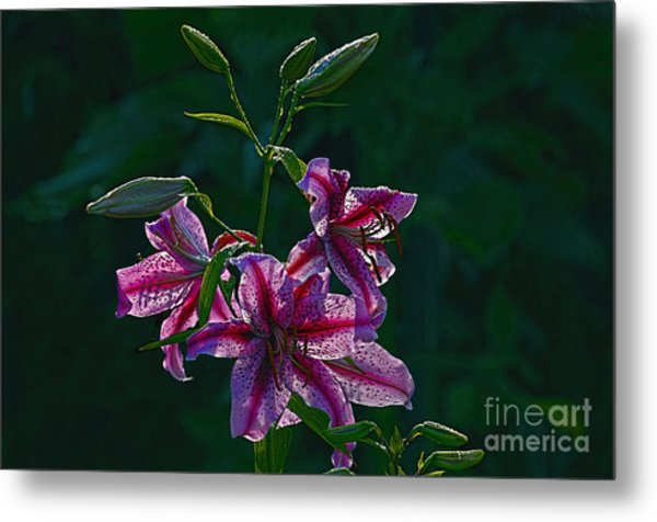 Pink Lilies In The Rain 2 Metal Print by Sharon Talson