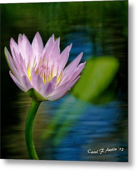 Purple Petals Lotus Flower Impressionism Metal Print