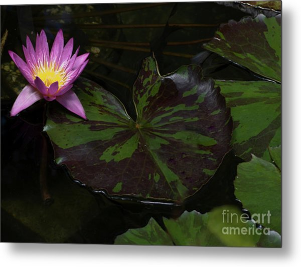 Pink Lotus Flower On Heart Shape Lily Pad Metal Print