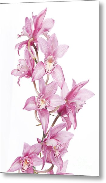 Pink Orchid Metal Print by Boon Mee