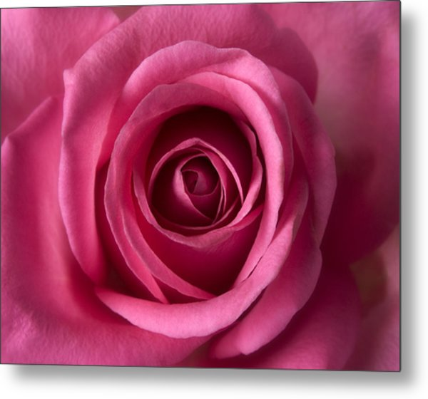 Pink Perfection - Roses Flowers Macro Fine Art Photography Metal Print