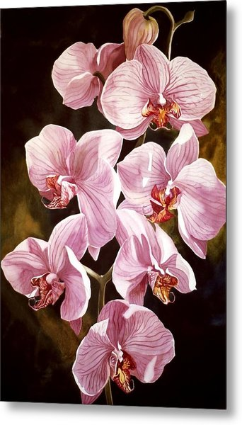 Pink Phalaenopiss Orchids Metal Print