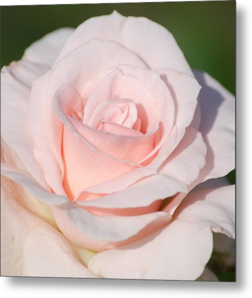 Pink Promise Metal Print by Nancy Edwards