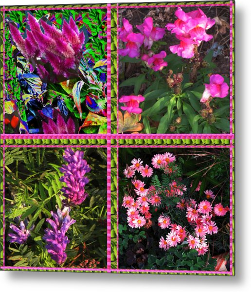 Pink Purple Flowers Captured At The Riverside Ridge At Oakville Ontario Canada Collage Beautiful     Metal Print