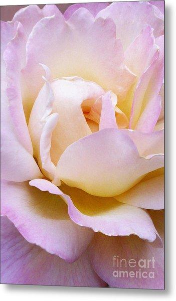 Pink Rose Forming Metal Print