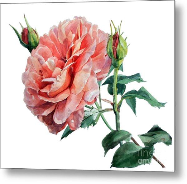 Pink Rose Odette  Metal Print