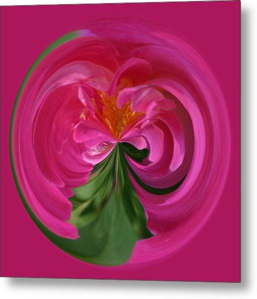 Pink Rose Series 112 Metal Print