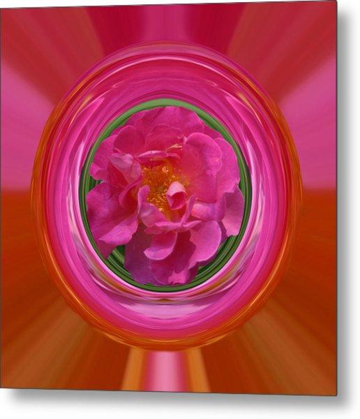 Pink Rose Series 113 Metal Print