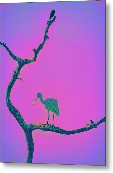 Pink Spoonbill Metal Print