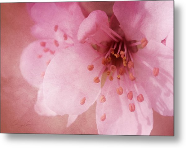 Pink Spring Blossom Metal Print