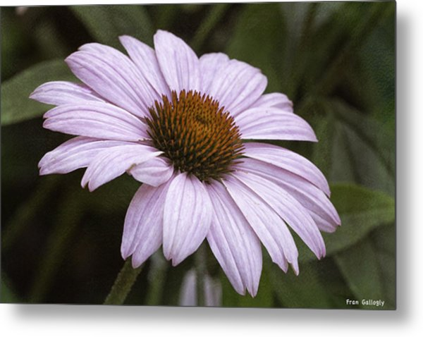Pink Summers Metal Print