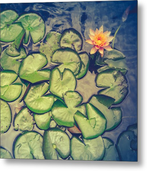 Pink Water Lily And Pads Metal Print