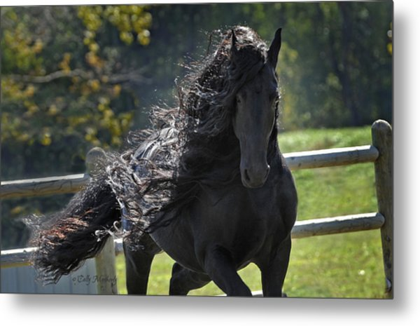 Pinnacle Of Friesians Metal Print