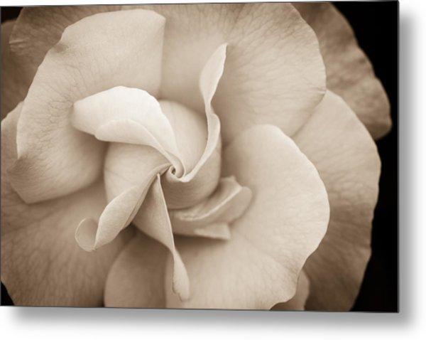 Pinwheel Rose Metal Print