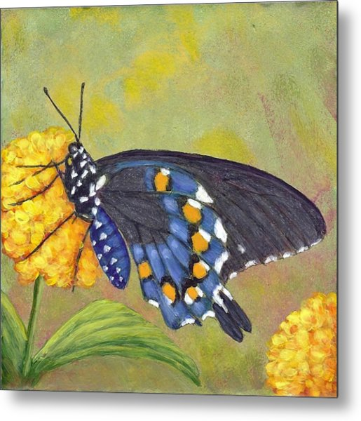 Pipevine Swallowtail Metal Print