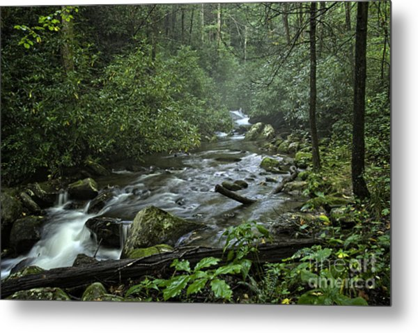 Pisgah Forest  Metal Print