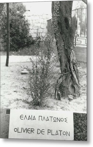 Plato�s Tree Metal Print by Retro Images Archive