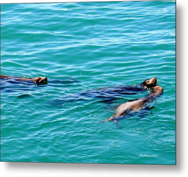 Playful Metal Print by Dick Botkin