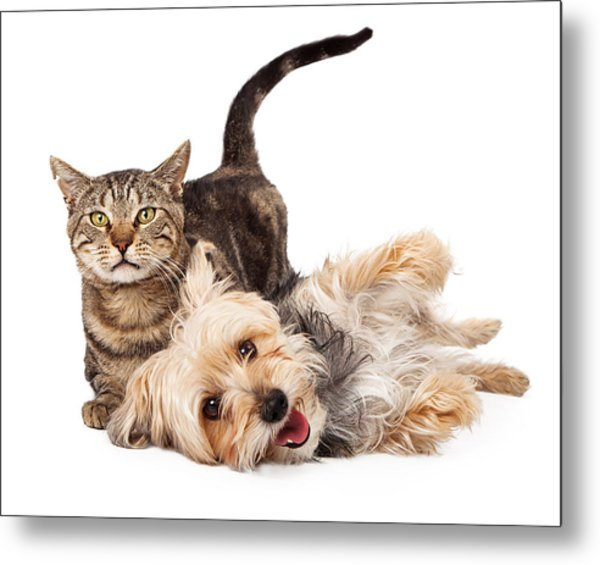 Playful Dog And Cat Laying Together Metal Print