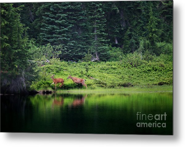 Playing In The Wild Metal Print
