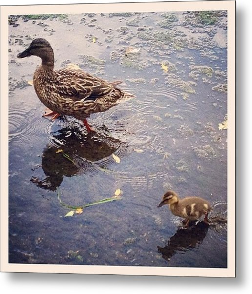 Playing In Water Metal Print by Mike Maher